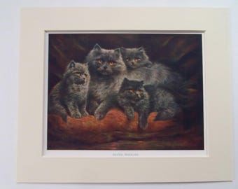 "Cats Silver Persians Original Vintage bookplate dated 1910  in new 11"" x 9"" mount ready to frame"