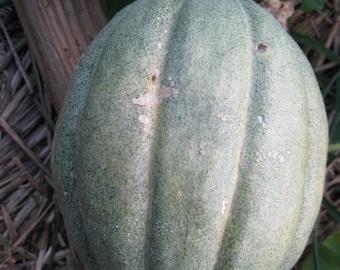 Heirloom Old Time Tennessee Muskmelon 20 seeds