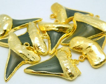 Real Shark Tooth Pendant Charm with 24K Gold Electroplated Trim (S18B12-10)