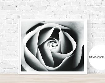 Rose Print, Flower Wall Art, Black and White, Nature Photography, Modern Minimalist, Rose Petals, Botanical Wall Art, Rose Poster