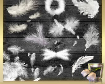 10 Feathers Overlays Vol. 3 - White feather digital clip art Newborn Overlays Foto Overlays Photography-Overlays  Instant Download PNG Files