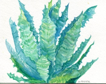 Succulent  Watercolor Painting Original 5 x 7, Greens, pinks, Agave, succulents home decor SharonFosterArt