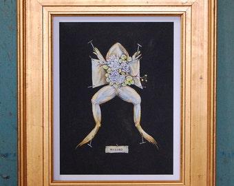 Frog Print, Open Edition, Giclee Print, wildlife print, nature print, macabre art, anatomy, anatomical art, botanical art, simka sol