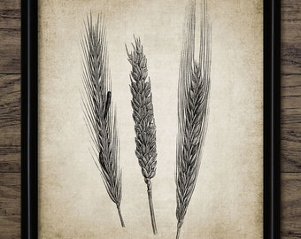 Wheat Print - Wheat Illustration - Wheat Cereal Art - Wheat Plant Decor - Digital Art - Printable Art - Single Print #252 - INSTANT DOWNLOAD