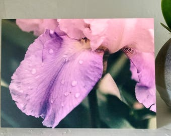 Macro Violet Greeting Card