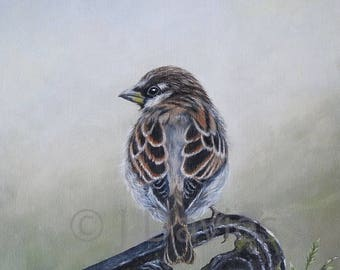 bird print, Sparrow Painting, Sparrow Art Print, Garden Sparrow, Bird Print, garden bird print, sparrow artwork