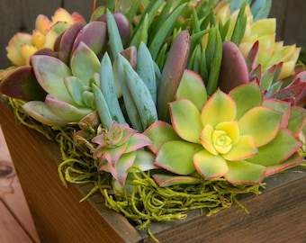 Mother's Day Gift, Mothers Day Springtime Succulent  Centerpiece,  Mothers Day Floral Gift , Springtime Succulent Tabletop