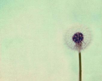 wishes, dreamy, summer, dandelion,  fine art photography