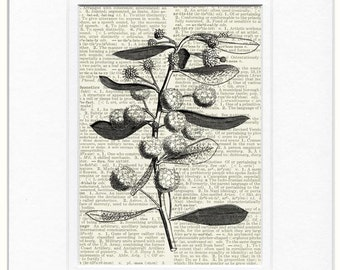 18oo's Acacia bombycina print