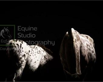 Appaloosa Abstract 4, Fine Art Print, Equine Photography