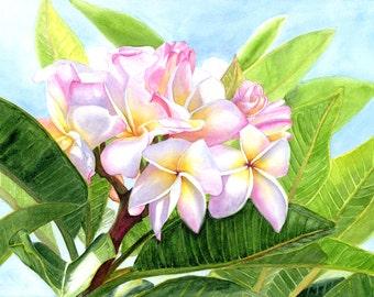 Daisy White Plumeria Painting Art Print