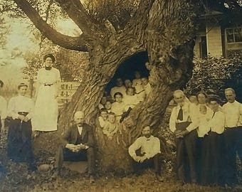 Antique Victorian Photograph Family Group, 26 People 13 Children Inside a Tree