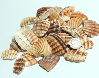 Large Well tumbled Seashells fragments from Mediterranean sea / for jewelry making or any project Lot of 40 / S23