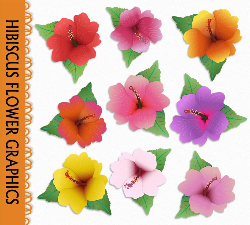 Hibiscus flower clip art graphic leaves plant nature clipart hibiscus flower clip art graphic leaves plant nature clipart scrapbook red pink purple yellow digital download png jpg vector commercial use izmirmasajfo Images