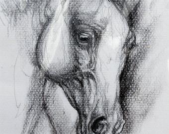 Arabian horse, equine art, equestrian, cheval, horse portrait, original pencil drawing