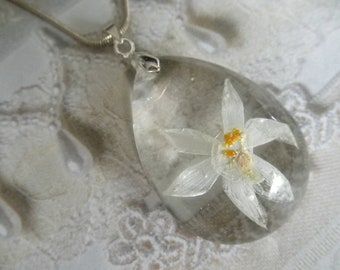 Narcissus-Paper White Blossom Encased In Glass Teardrop Pendant-Symbol Rebirth, New Beginnings, Synonymous with Spring-Nature Inspired