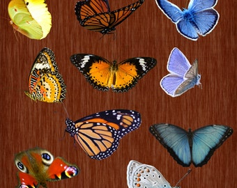 10 butterfly overlays