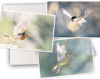 Three greeting cards birds in flight - bird nature - three birds greetings cards photos greeting cards - bird photo cards