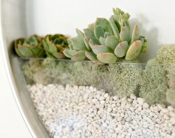 Green Succulent Plant, succilent arrangment on wall, Minimalist Photograph Print, art