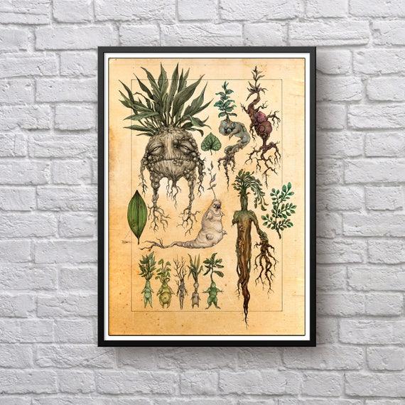 Harry Potter Mandrake Poster Mandragora Mandrake Harry