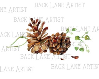 Pinecone Watercolor Drawing Clipart Lineart Illustration Instant Download PNG JPG Digi Line Art Image Drawing L327