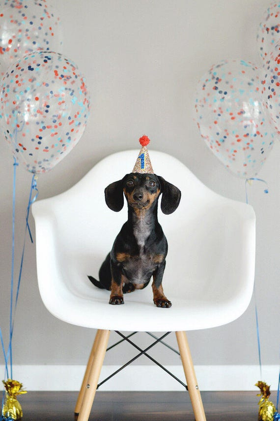 Dog Birthday Hat     Dog Lover Gift    Dog Clothes    Dog Tag    Circus Party Hat