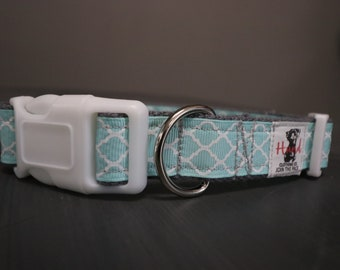 Teal dog collar join the pack