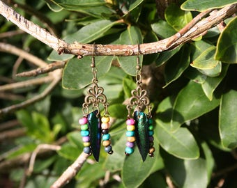 Earrings with pearls & beetle Elytra wings, handmade by me / with beetle wings, bronze Earrings