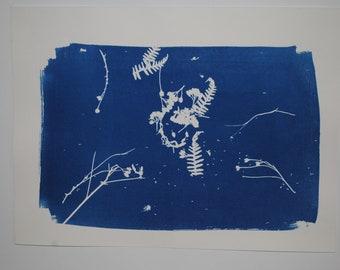 cyanotype print (4)
