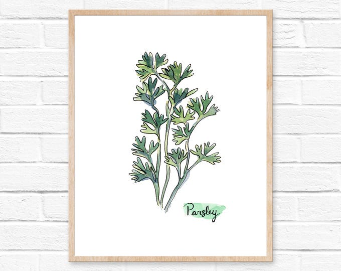 Watercolor Parsley Herb Print No. 101, Kitchen Herb Decor, Herb Print, Parsley Wall Art, Kitchen Print, Parsley, Botanical Watercolor Print