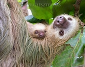 SLOTH and SLEEPY BABY Pho...