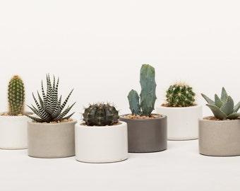 Concrete Planter, Mini Planter, Concrete Mini Planter, Succulent Planter,  Cactus Planter,
