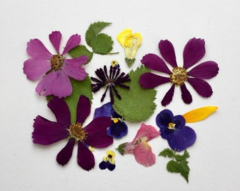 50 Pressed Dry Flowers, Flower Petals, Leaves, Invitations, Paper Craft, Decoupage, Biodegradable, Table Decor, Centerpieces, Wedding Decor