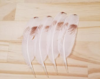 White Pigeon Feathers Cruelty Free Humane Naturally Molted Real Feathers #a67