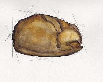 original cat watercolor and pencil on paper, Euclid's Cat II, 8 x 10