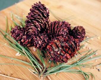 Cherry Hibiscus Bunny Pine Cone Chews