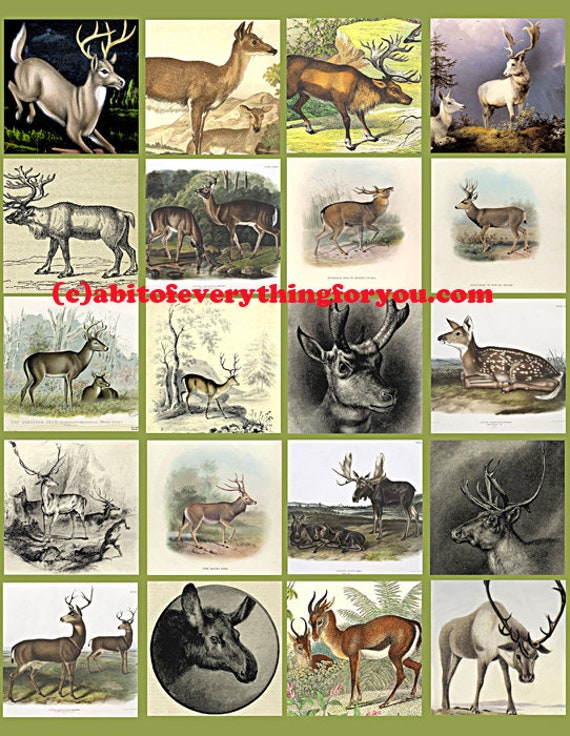 deer bucks does collage sheet 2 inch squares clip art digital download graphics images  animal nature art craft pendant pins printables
