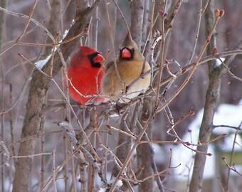 Cardinal Pair - Notecard