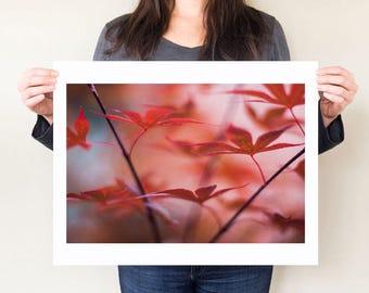 Maple tree photography print, red maple leaves photograph. Woodland art, Japanese maple artwork, botanical home decor, oversized wall art