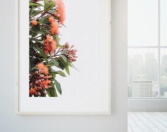 Australian Wall art gum tree flower, living room wall art print