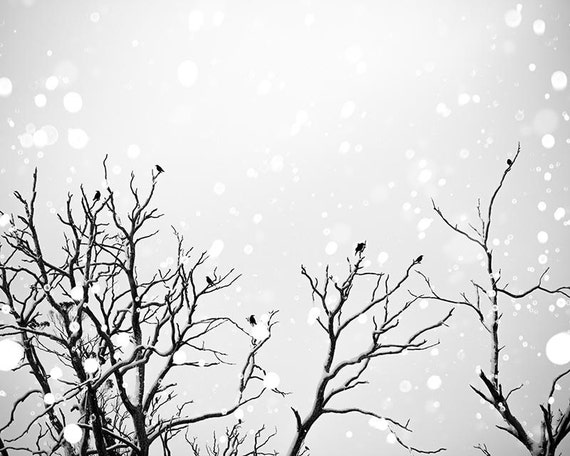 Winter birds canvas print black and white prints birds photography canvas print nature nursery decor black and white canvas art large gray