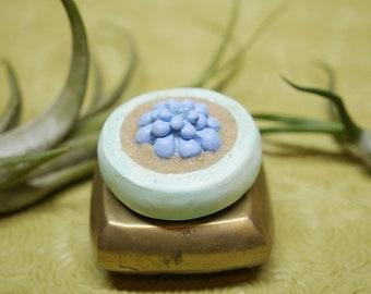 Miniature Succulent - Soft Buds