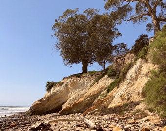 Santa Barbara Central Coast California tree beach cliff nature - Fine art photography print gift wall hanging
