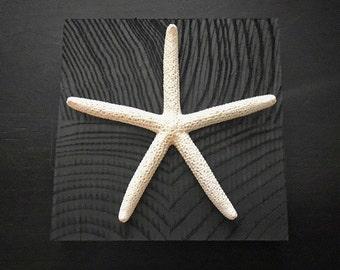Custom Starfish Shell Art- Black