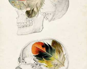 Feathers In My Head - FREE SHIPPING - Medical Diagram Print Skull Bone Head Feathers Black White Orange Split Vintage Science Wall Art Decor