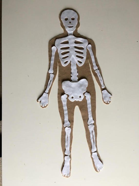 Human Anatomy Felt Set Felt Human Organs Felt Puzzle Felt