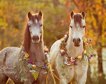 Horse Photography, Two Ponies with flowers, Flower Pony picture, Girl's Room decor, Picture of Horse, Equine Art, Horse Art, Cute Pony