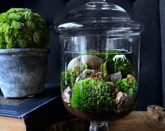 Grazing Horses Terrarium with Live Plants: Limited Edition