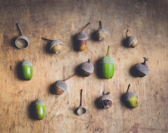 acorn photograph, rustic farmhouse decor, acorn collection, fall photograph, autumn, nature photograph, oak tree acorns, woodland print