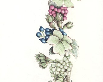 Floral Swag, berries and flowers, Prismacolor colored pencil, printed on white 80 lb archival cover stock.